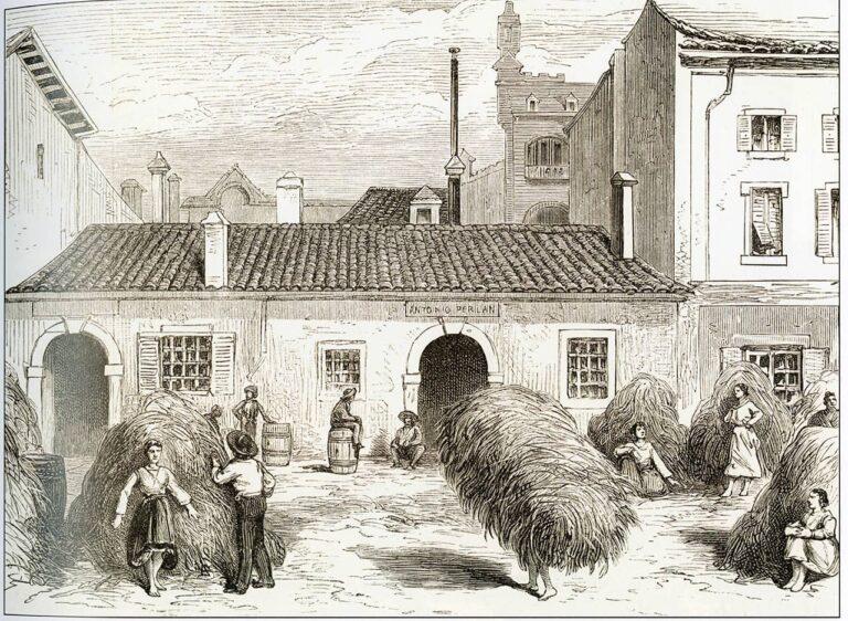 Hay gatherers from the outskirts of Rijeka, 1878